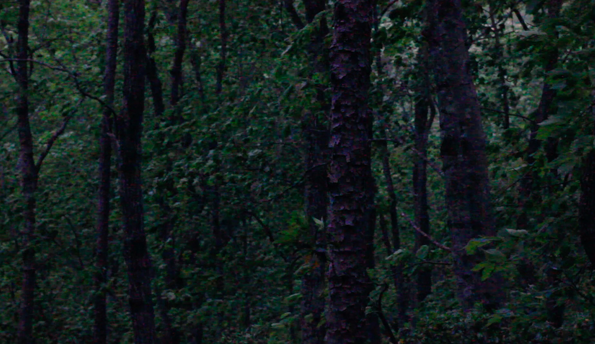 Film still showing trees of a forest in a rain storm